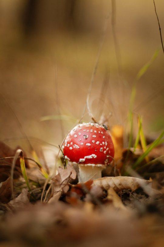 Psilocybin Mushroom Legality