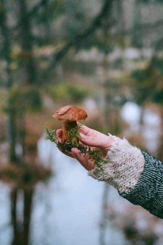 Grow Psilocybin Mushroom Spores