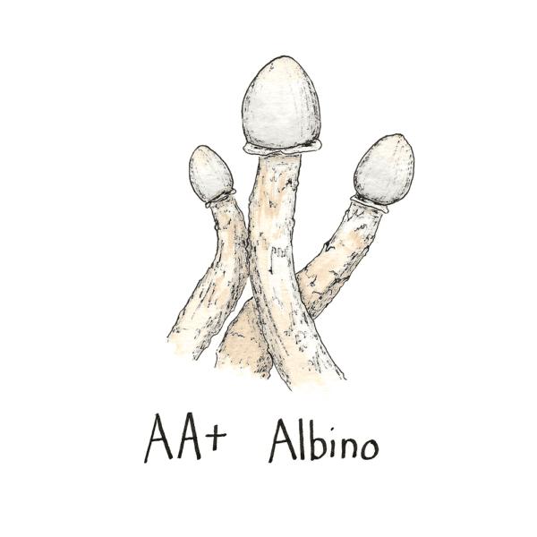AA+ Albino Mushroom