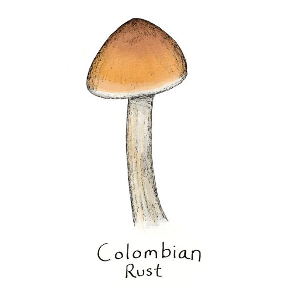 Colombian Rust Mushroom