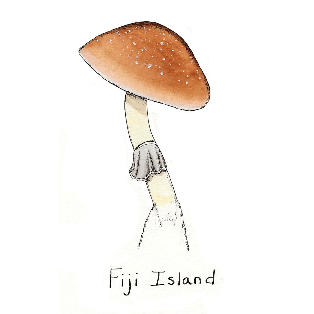 Fiji Island Mushroom