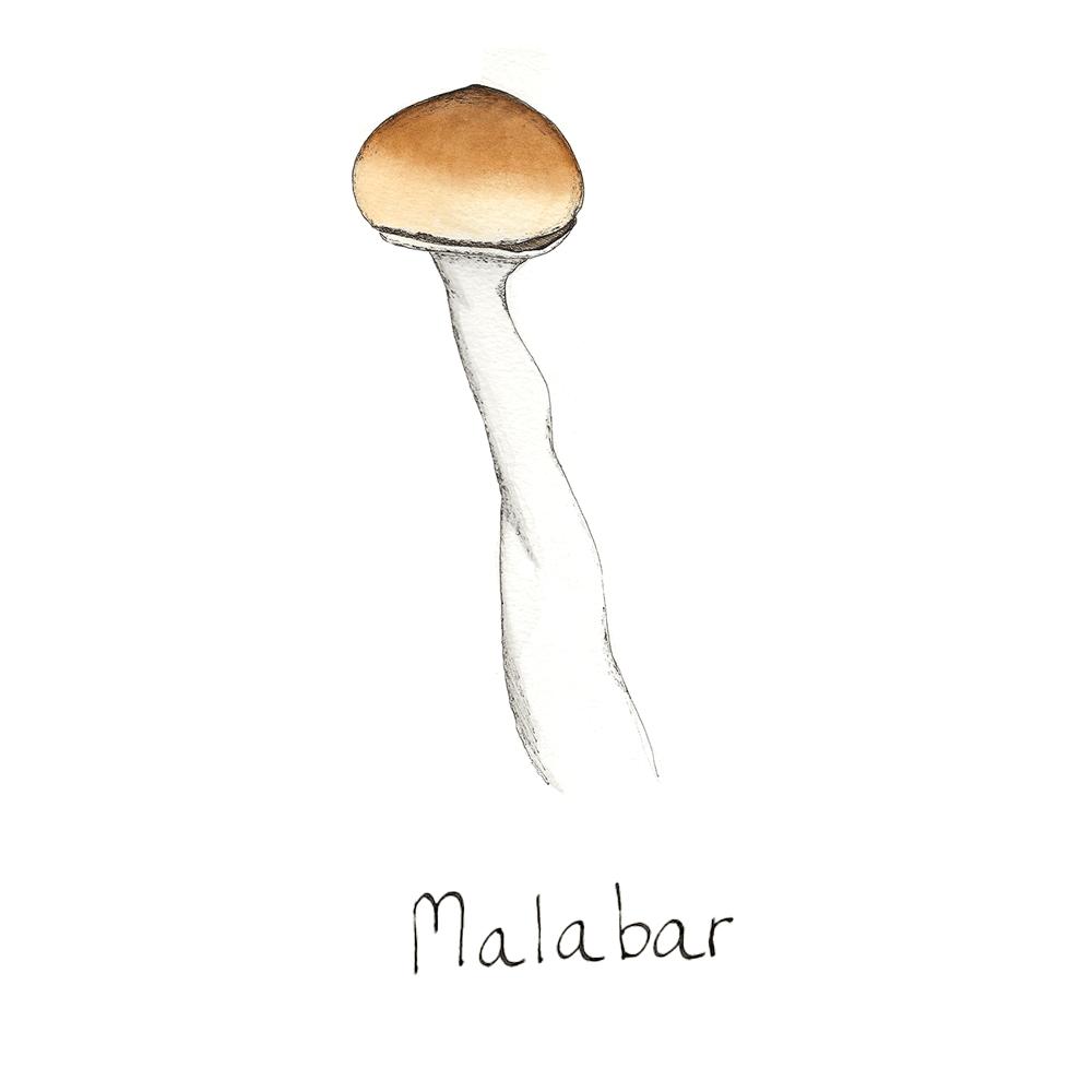 Malabar Mushroom