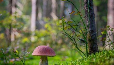 Psilocybin Mushrooms Legality Information