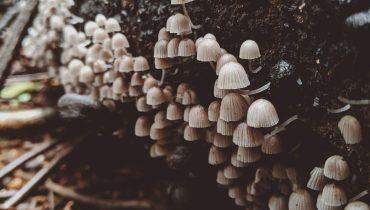 magic mushroom grow kit