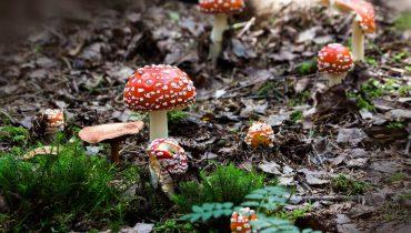 magic mushrooms and psilocybin questions answered